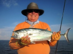 Lynn Skipper, from Apollo Beach, FL, had good action catching and releasing false albacore on flies while fishing the coastal gulf near Tampa Bay with Capt. Rick Grassett.