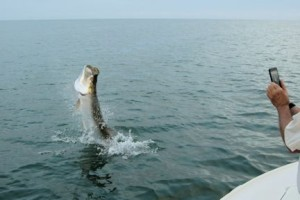 Barry Slee, from IL. jumped this tarpon while fishing the coastal gulf in Sarasota with Capt. Rick Grassett.