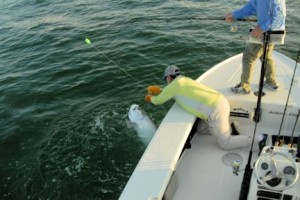 Capt. Rick Grassett leaders a tarpon caught and released in the coastal gulf in Sarasota by Jim Dempsey, from IL.