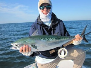 Rick  O'Hara, from Tampa, had good action catching releasing false albacore on flies while fishing the coastal gulf in Sarasota with Capt. Rick Grassett.