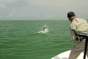 Frank Zaffino, from Rochester, NY, battles a tarpon caught and released on fly tackle in the the coastal gulf in Sarasota while fishing with Capt. rick Grassett in a previous July.