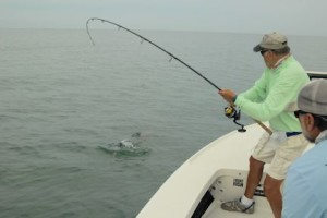 Dennis Ondercin, from OH, battles a tarpon to the boat while fishing with Capt. Rick Grassett in a previous May.
