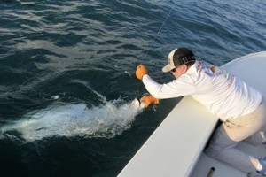 Capt. Rick lands a tarpon caught by Dave Reinhart, from MA, while fishing the coastal gulf.